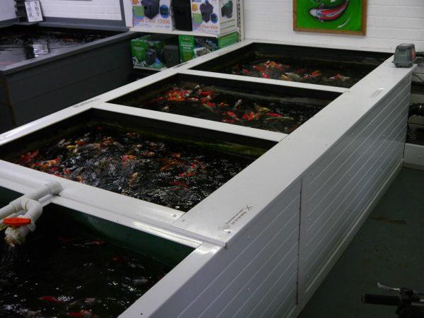 SF-Pond-clear-filter-UV-SF-8000lph-ECO-pump-pipe-clips-ponds-upto-12000L-322533977391-4